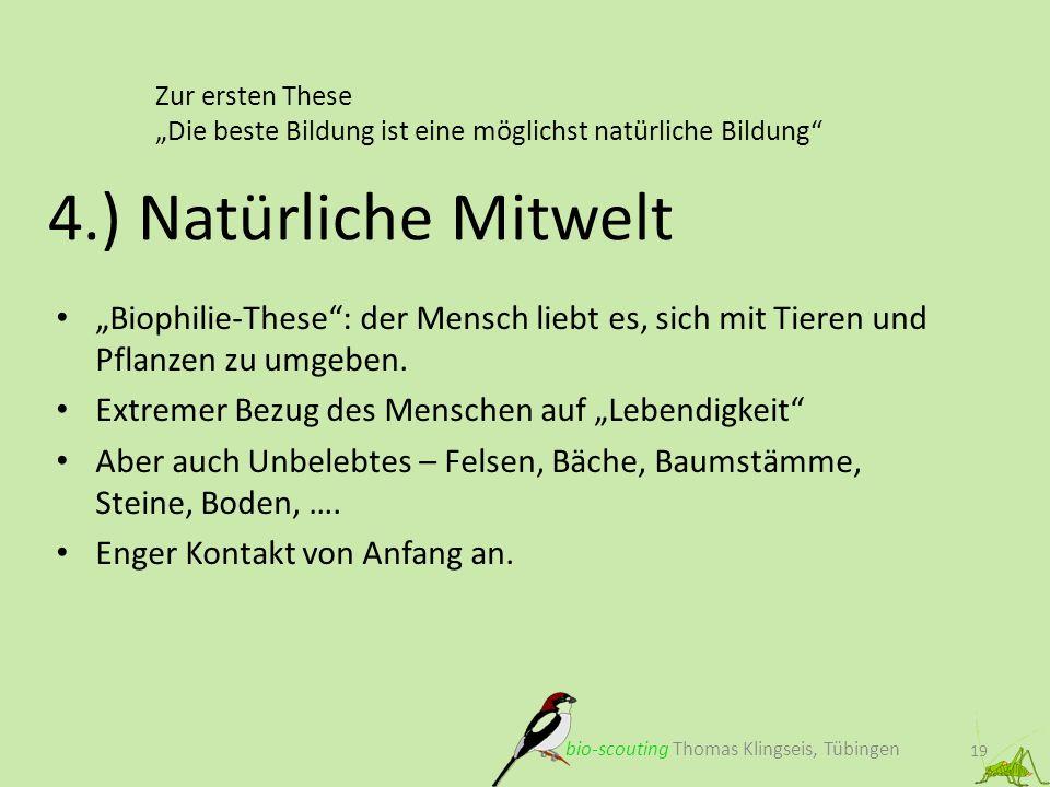 Zur ersten These Die beste Bildung ist eine möglichst natürliche Bildung 19 4.) Natürliche Mitwelt bio-scouting Thomas Klingseis, Tübingen Biophilie-T