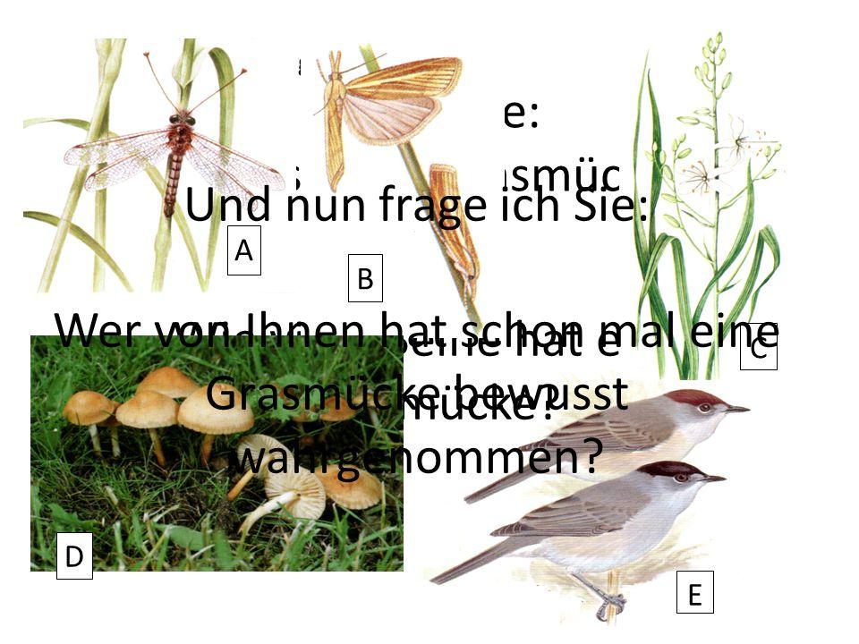 Zweite Vorbemerkung Quizfrage: Was ist eine Grasmücke? E Oder: Wie viele Beine hat eine Grasmücke? A B C D Und nun frage ich Sie: Wer von Ihnen hat sc