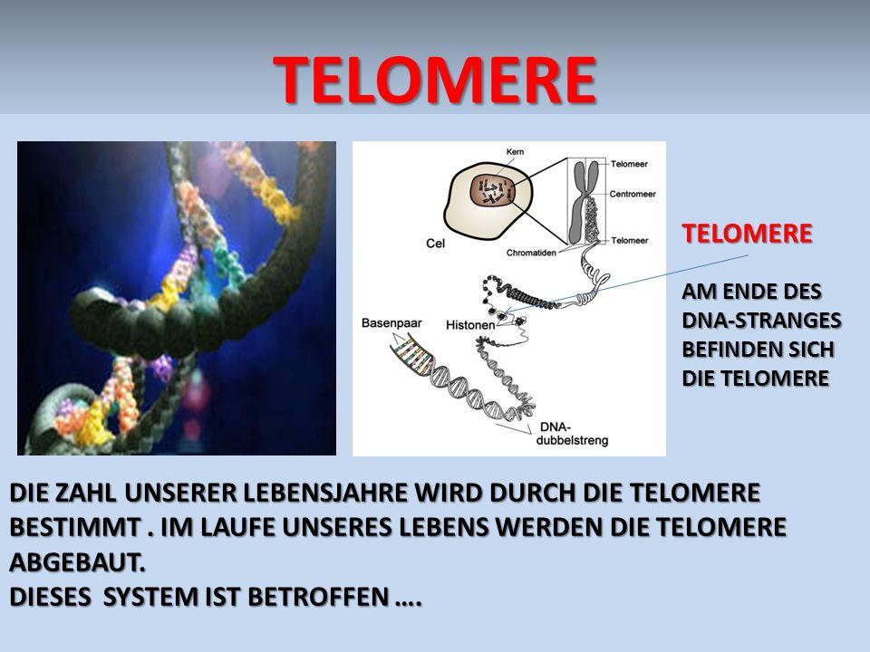 TELOMERETELOMERE DIE ZAHL UNSERER LEBENSJAHRE WIRD DURCH DIE TELOMERE BESTIMMT. IM LAUFE UNSERES LEBENS WERDEN DIE TELOMERE ABGEBAUT. DIESES SYSTEM IS