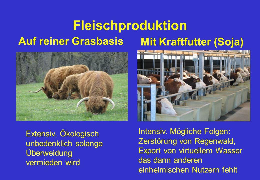 Fleischproduktion Auf reiner Grasbasis Mit Kraftfutter (Soja) Intensiv.
