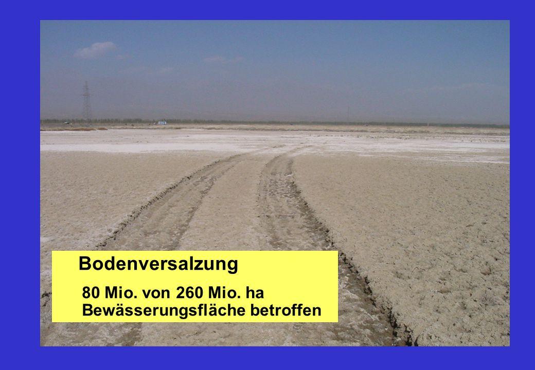 Bodenversalzung 80 Mio. von 260 Mio. ha Bewässerungsfläche betroffen
