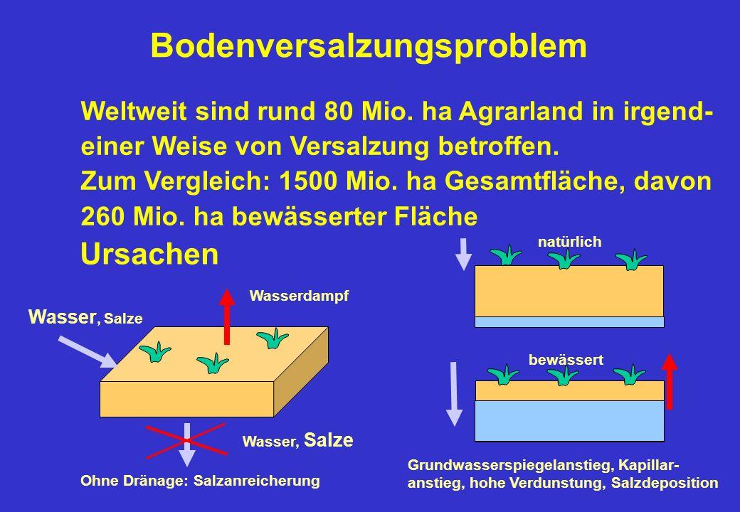 Bodenversalzungsproblem Ursachen Wasser, Salze Wasserdampf Ohne Dränage: Salzanreicherung natürlich bewässert Grundwasserspiegelanstieg, Kapillar- anstieg, hohe Verdunstung, Salzdeposition Weltweit sind rund 80 Mio.