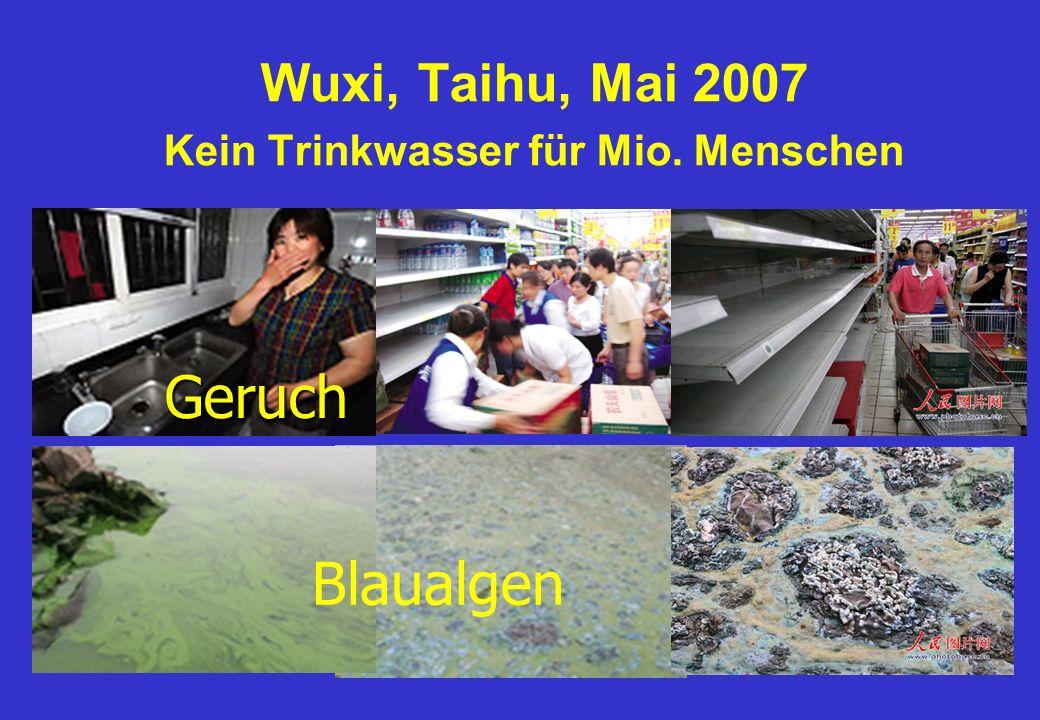 Wuxi, Taihu, Mai 2007 Kein Trinkwasser für Mio. Menschen Geruch Blaualgen