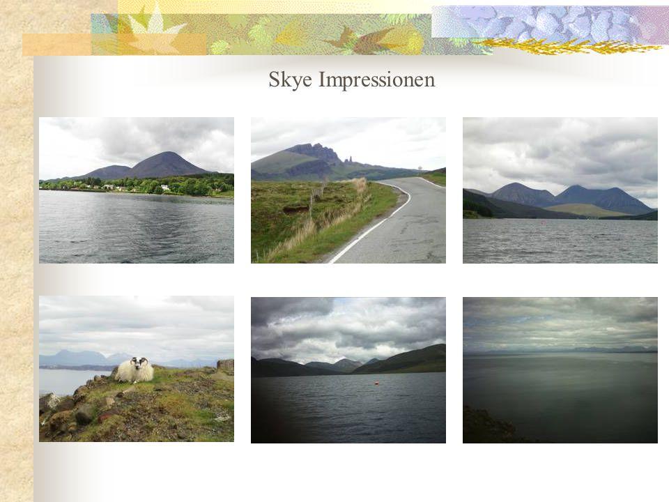 Auf der Isle of Skye haben wir bei einer Bootstour ein paar Seehunde beobachten können.