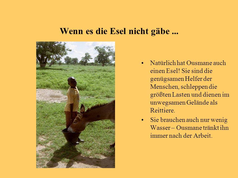 Wenn es die Esel nicht gäbe... Natürlich hat Ousmane auch einen Esel! Sie sind die genügsamen Helfer der Menschen, schleppen die größten Lasten und di