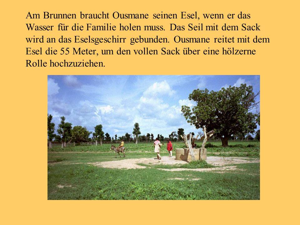 Am Brunnen braucht Ousmane seinen Esel, wenn er das Wasser für die Familie holen muss. Das Seil mit dem Sack wird an das Eselsgeschirr gebunden. Ousma
