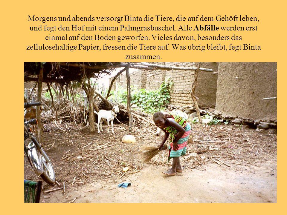 Morgens und abends versorgt Binta die Tiere, die auf dem Gehöft leben, und fegt den Hof mit einem Palmgrasbüschel. Alle Abfälle werden erst einmal auf