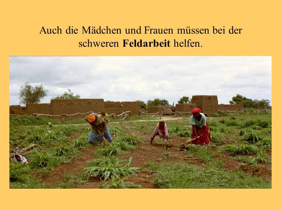 Auch die Mädchen und Frauen müssen bei der schweren Feldarbeit helfen.