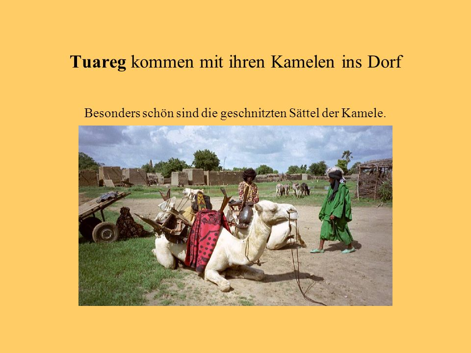 Tuareg kommen mit ihren Kamelen ins Dorf Besonders schön sind die geschnitzten Sättel der Kamele.