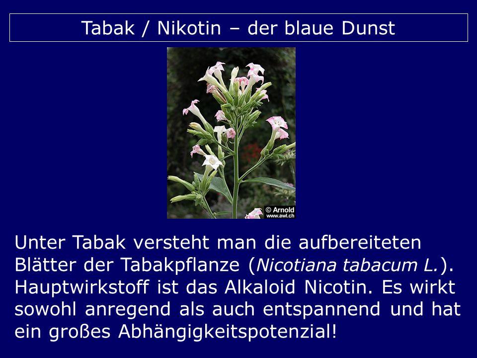 Tabak / Nikotin – der blaue Dunst Unter Tabak versteht man die aufbereiteten Blätter der Tabakpflanze ( Nicotiana tabacum L. ). Hauptwirkstoff ist das