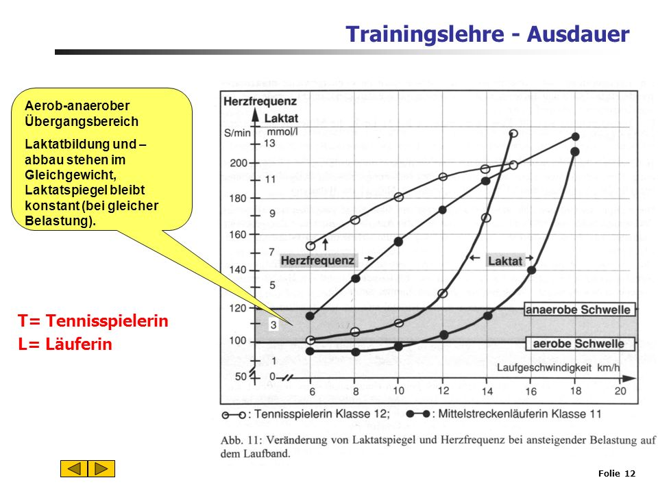 Trainingslehre - Ausdauer Folie 11 Aerobe Schwelle Energiegewinnung fast ausschließlich aerob. 50% Energie durch Fette. T= Tennisspielerin L= Läuferin