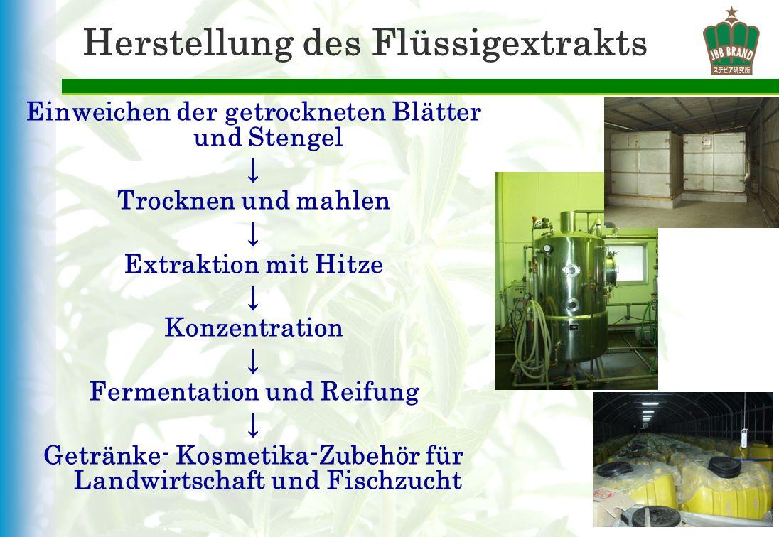 Herstellung des Flüssigextrakts Einweichen der getrockneten Blätter und Stengel Trocknen und mahlen Extraktion mit Hitze Konzentration Fermentation un
