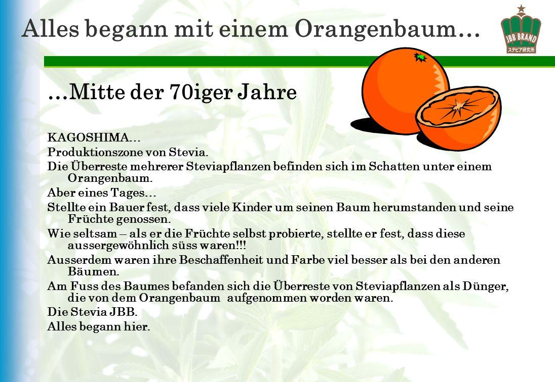 Alles begann mit einem Orangenbaum… …Mitte der 70iger Jahre KAGOSHIMA… Produktionszone von Stevia. Die Überreste mehrerer Steviapflanzen befinden sich