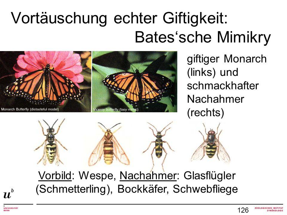 Vortäuschung echter Giftigkeit: Batessche Mimikry Vorbild: Wespe, Nachahmer: Glasflügler (Schmetterling), Bockkäfer, Schwebfliege giftiger Monarch (links) und schmackhafter Nachahmer (rechts) 126