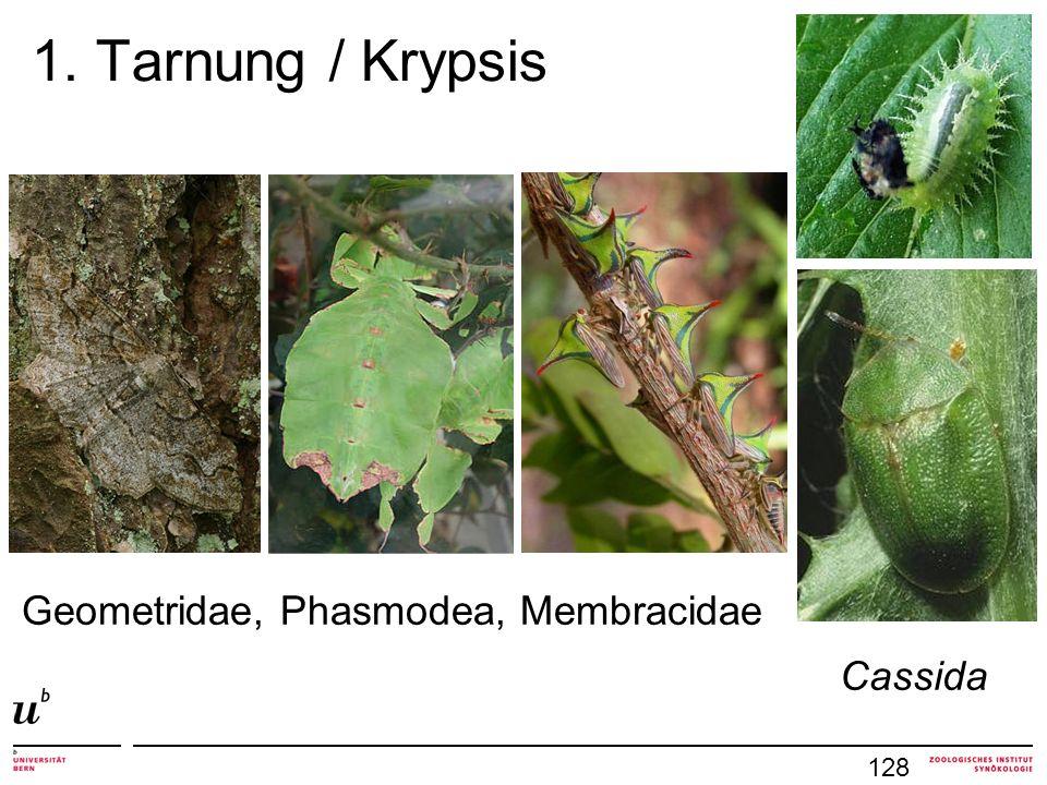 1. Tarnung / Krypsis 128 Cassida Geometridae, Phasmodea, Membracidae