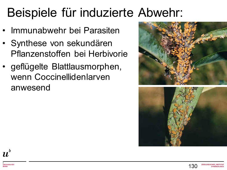 Beispiele für induzierte Abwehr: Immunabwehr bei Parasiten Synthese von sekundären Pflanzenstoffen bei Herbivorie geflügelte Blattlausmorphen, wenn Coccinellidenlarven anwesend 130
