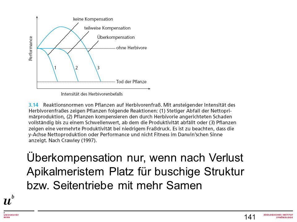 141 Überkompensation nur, wenn nach Verlust Apikalmeristem Platz für buschige Struktur bzw.