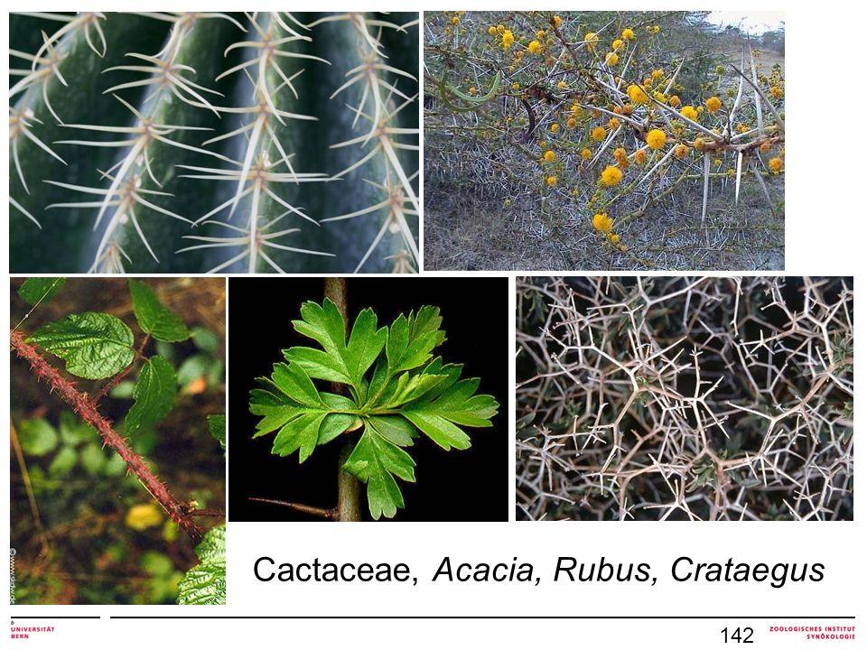 Cactaceae, Acacia, Rubus, Crataegus 142