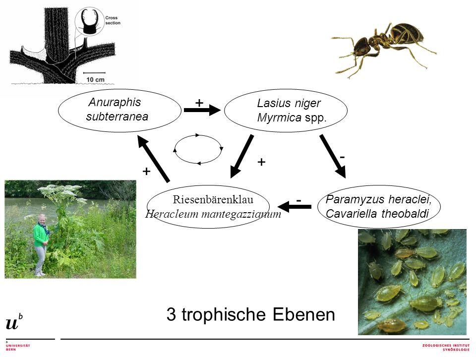 + + + - - Lasius niger Myrmica spp.