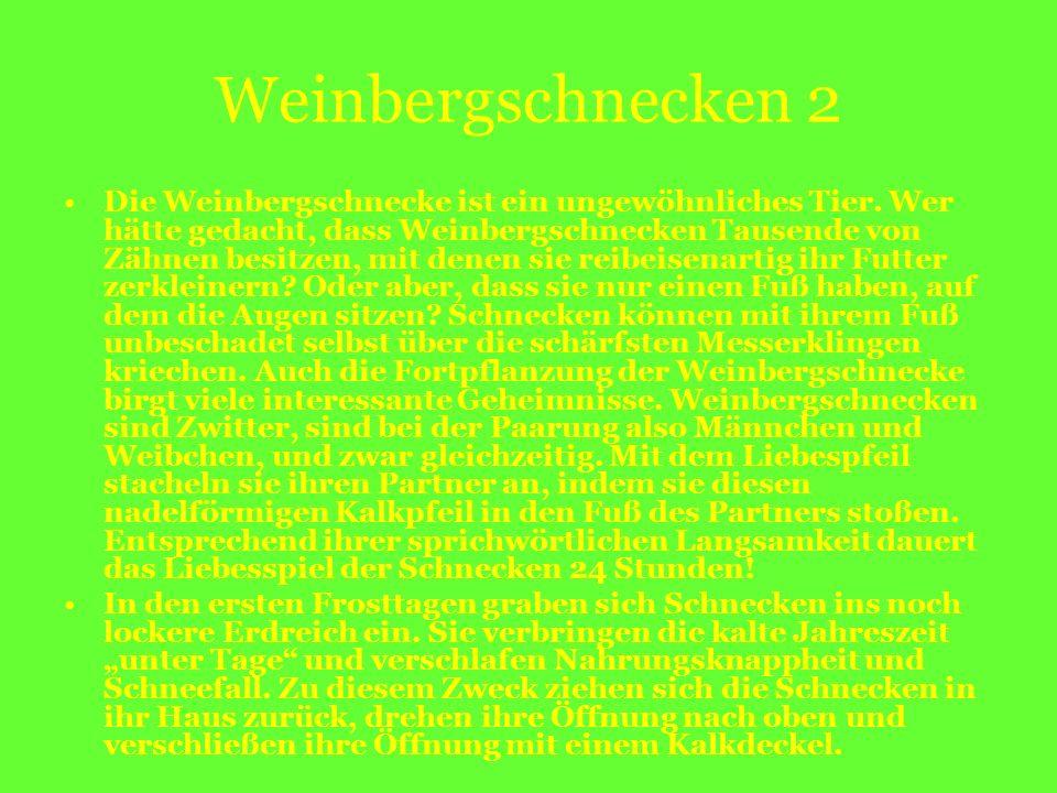 Weinbergschnecken 2 Die Weinbergschnecke ist ein ungewöhnliches Tier. Wer hätte gedacht, dass Weinbergschnecken Tausende von Zähnen besitzen, mit dene
