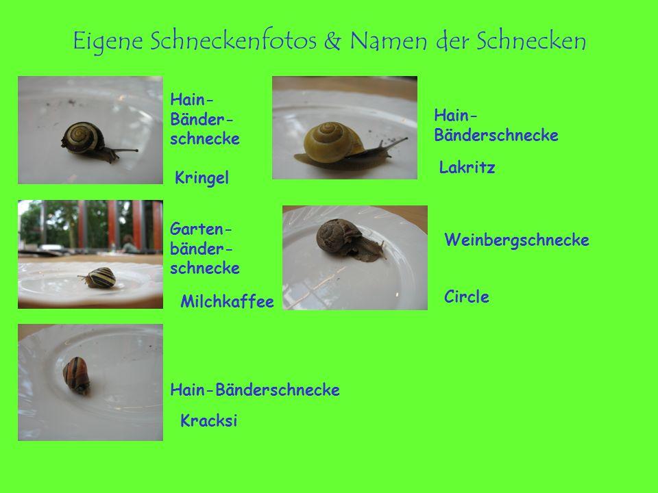 Eigene Schneckenfotos & Namen der Schnecken Kringel Lakritz Milchkaffee Circle Kracksi Weinbergschnecke Garten- bänder- schnecke Hain- Bänder- schneck