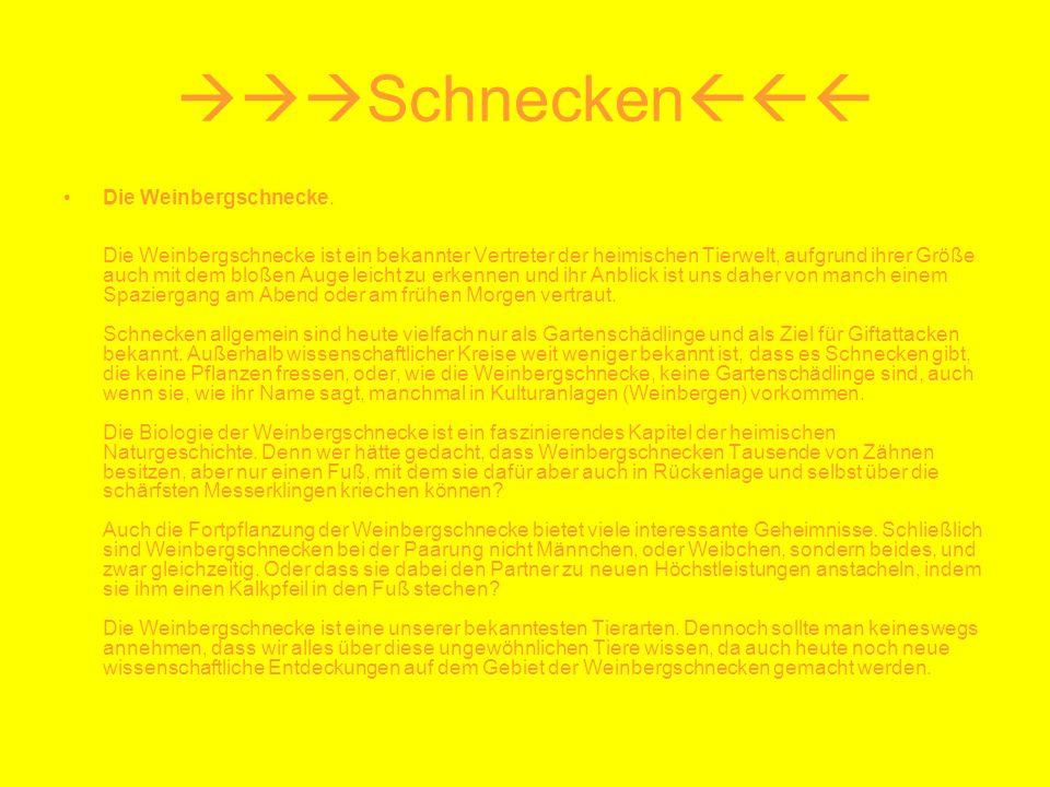 Schnecken Die Weinbergschnecke. Die Weinbergschnecke ist ein bekannter Vertreter der heimischen Tierwelt, aufgrund ihrer Größe auch mit dem bloßen Aug