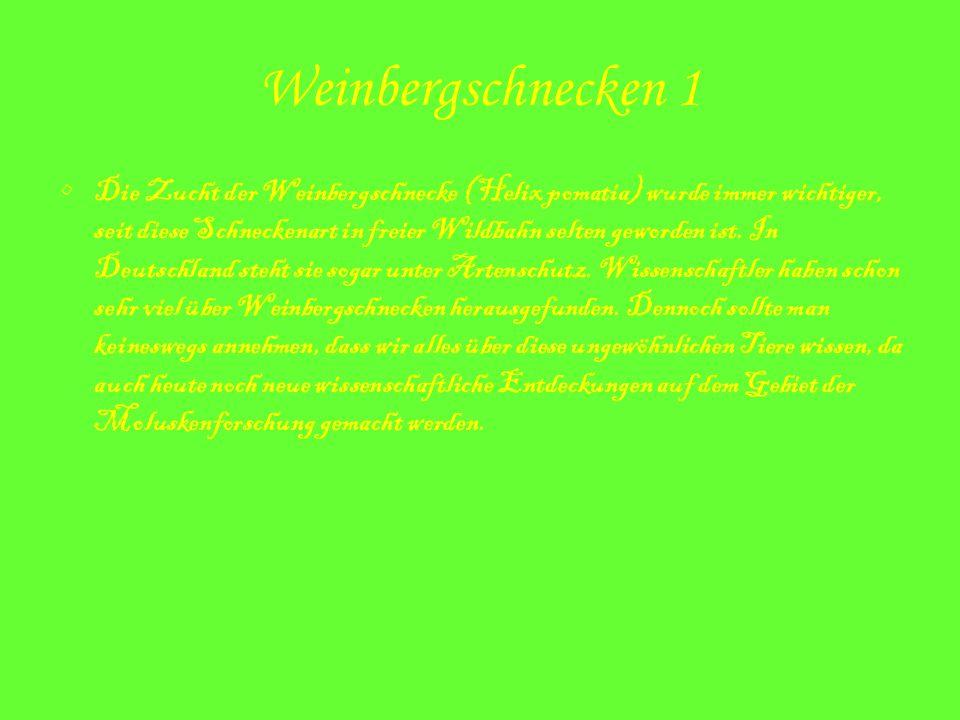 Weinbergschnecken 1 Die Zucht der Weinbergschnecke (Helix pomatia) wurde immer wichtiger, seit diese Schneckenart in freier Wildbahn selten geworden i