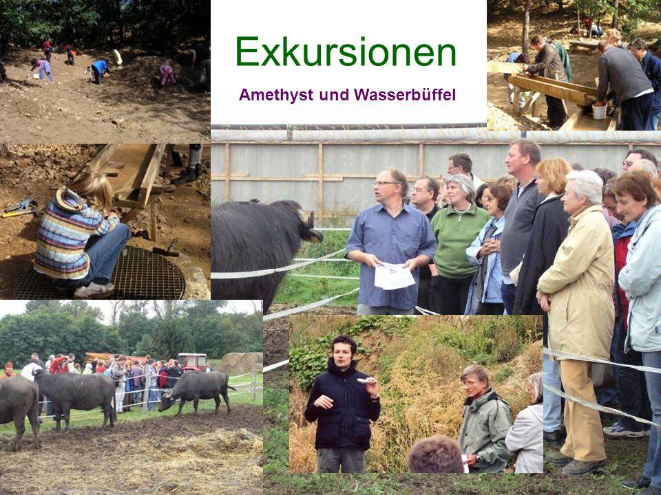 Exkursionen Amethyst und Wasserbüffel