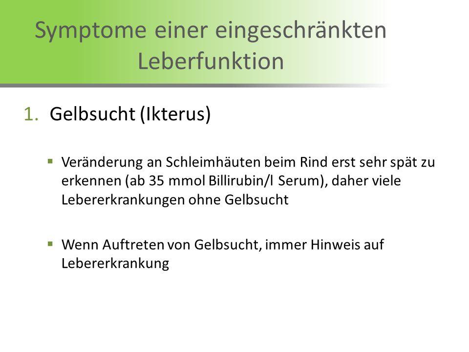Symptome einer eingeschränkten Leberfunktion 1.Gelbsucht (Ikterus) Veränderung an Schleimhäuten beim Rind erst sehr spät zu erkennen (ab 35 mmol Billi