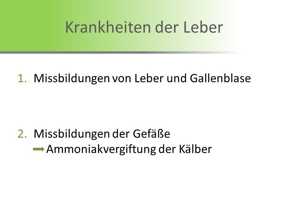 Krankheiten der Leber 1.Missbildungen von Leber und Gallenblase 2.Missbildungen der Gefäße Ammoniakvergiftung der Kälber