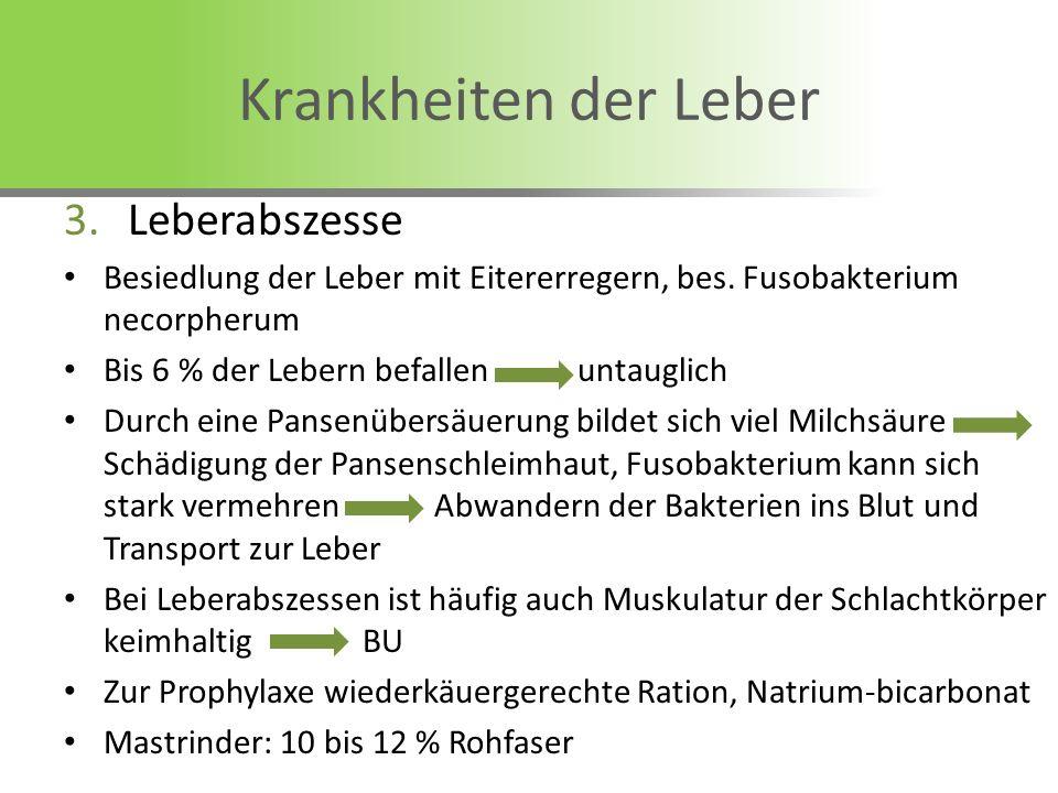 3.Leberabszesse Besiedlung der Leber mit Eitererregern, bes. Fusobakterium necorpherum Bis 6 % der Lebern befallen untauglich Durch eine Pansenübersäu