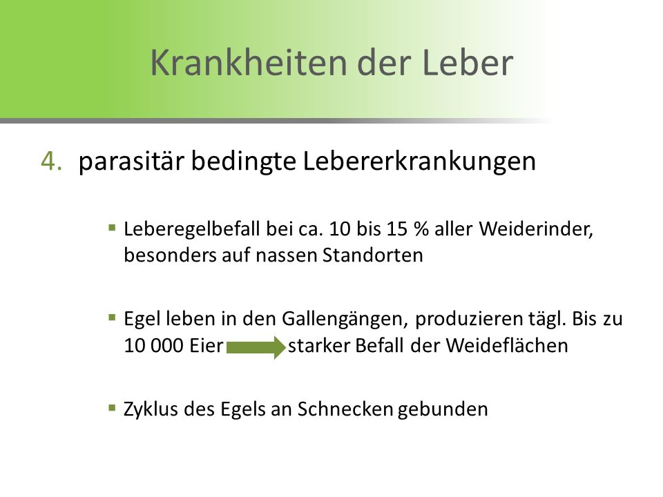 4.parasitär bedingte Lebererkrankungen Leberegelbefall bei ca. 10 bis 15 % aller Weiderinder, besonders auf nassen Standorten Egel leben in den Gallen