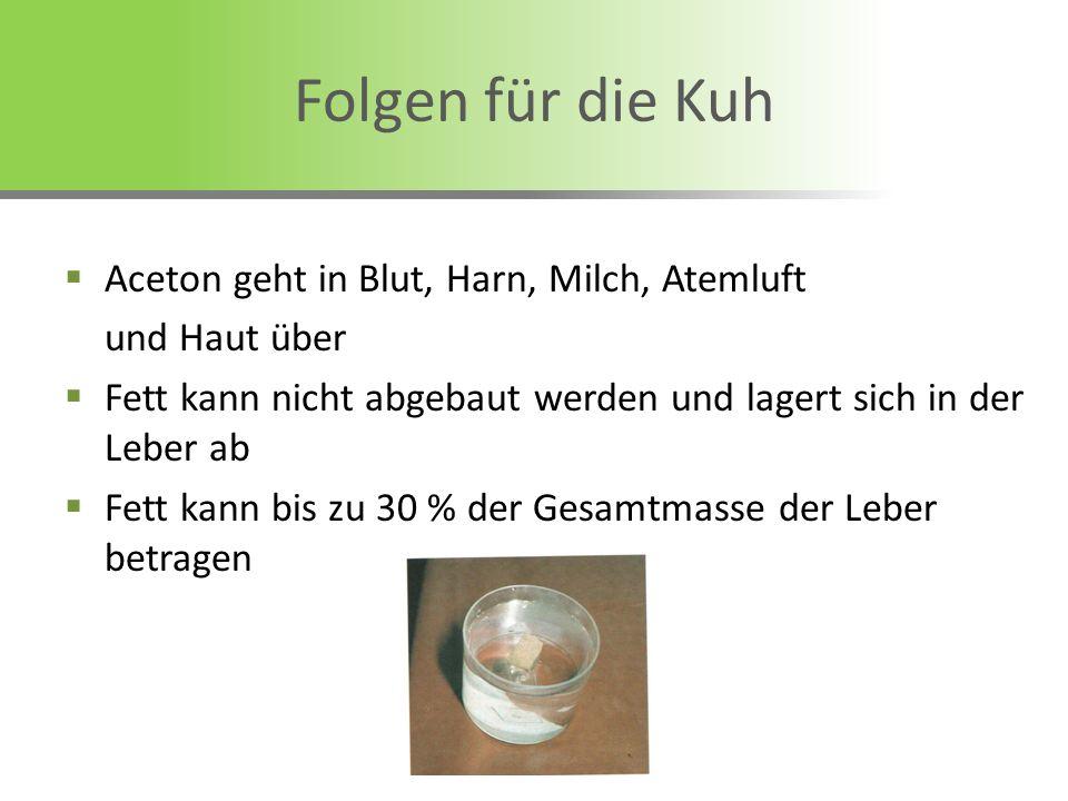 Aceton geht in Blut, Harn, Milch, Atemluft und Haut über Fett kann nicht abgebaut werden und lagert sich in der Leber ab Fett kann bis zu 30 % der Ges
