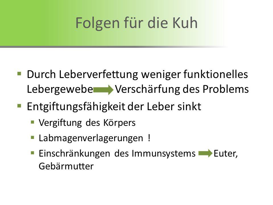 Durch Leberverfettung weniger funktionelles Lebergewebe Verschärfung des Problems Entgiftungsfähigkeit der Leber sinkt Vergiftung des Körpers Labmagen