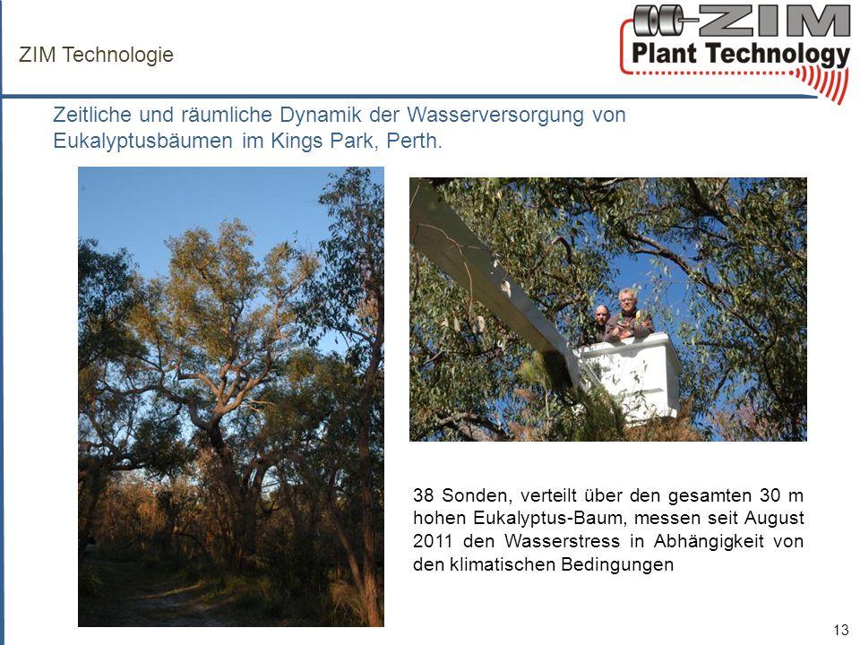 ZIM Technologie Zeitliche und räumliche Dynamik der Wasserversorgung von Eukalyptusbäumen im Kings Park, Perth.