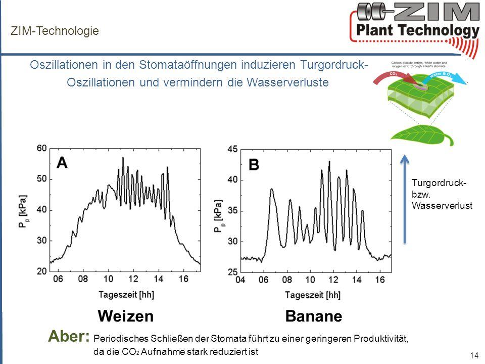 ZIM-Technologie Oszillationen in den Stomataöffnungen induzieren Turgordruck- Oszillationen und vermindern die Wasserverluste 14 Aber: Periodisches Schließen der Stomata führt zu einer geringeren Produktivität, da die CO 2 Aufnahme stark reduziert ist WeizenBanane Turgordruck- bzw.