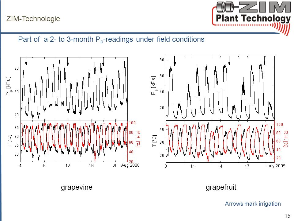 ZIM-Technologie Part of a 2- to 3-month P p -readings under field conditions 15 grapevine grapefruit Arrows mark irrigation