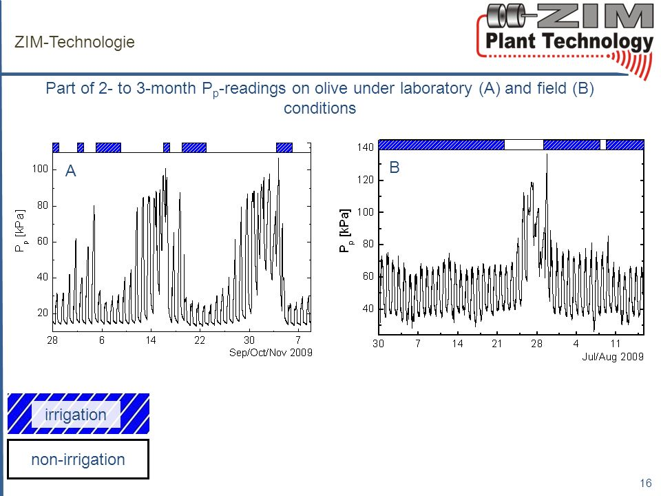 ZIM-Technologie Part of 2- to 3-month P p -readings on olive under laboratory (A) and field (B) conditions 16 A B non-irrigation irrigation