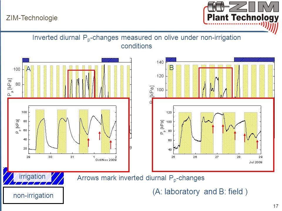 non-irrigation irrigation ZIM-Technologie Inverted diurnal P p -changes measured on olive under non-irrigation conditions 17 AB (A: laboratory and B: field ) A B Arrows mark inverted diurnal P p -changes