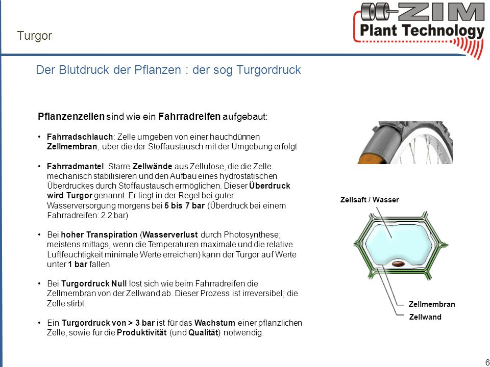 ZIM-Technologie P p = patch pressure P c = turgor pressure P clamp = clamp pressure F a = attenuation factor (compression of cuticle, cell walls and air-filled interspaces a, b = elasticity constants
