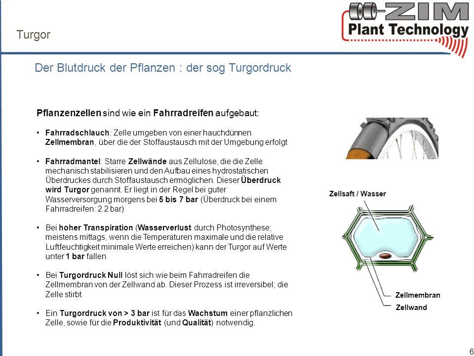 ZIM-Technologie Das innovative Messprinzip der ZIM-Sonde 7 Der Überdruck in den Zellen, der sog.