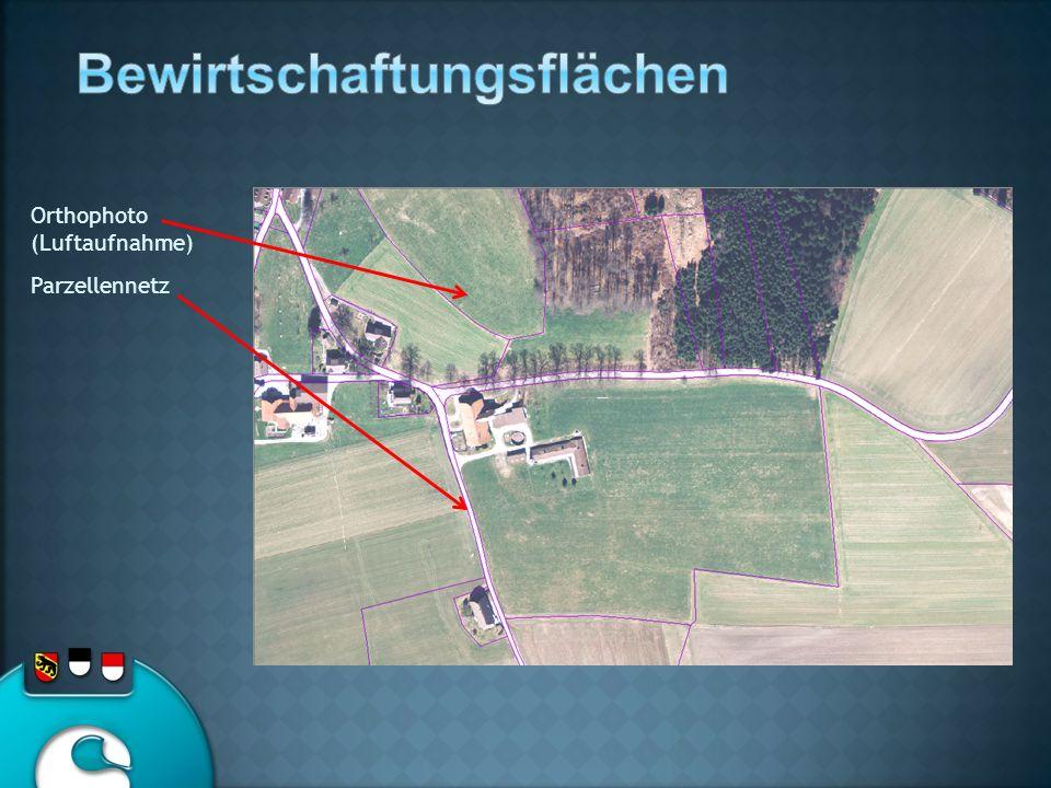 Orthophoto (Luftaufnahme) Parzellennetz