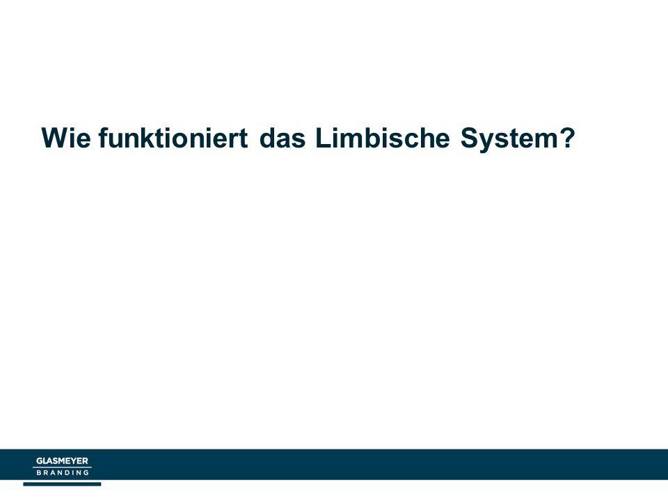 Wie funktioniert das Limbische System?