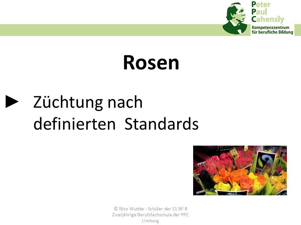 Züchtung nach definierten Standards Rosen © Nico Wuttke - Schüler der 11 BF B Zweijährige Berufsfachschule der PPC Limburg