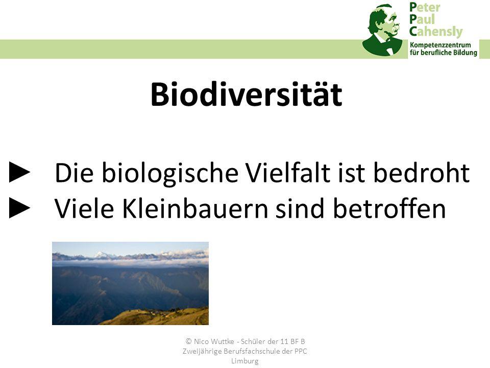 Die biologische Vielfalt ist bedroht Viele Kleinbauern sind betroffen Biodiversität © Nico Wuttke - Schüler der 11 BF B Zweijährige Berufsfachschule d