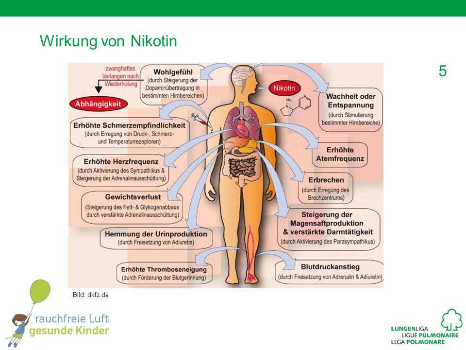 5 Wirkung von Nikotin Bild: dkfz.de