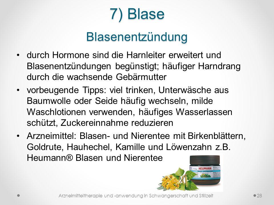 7) Blase Blasenentzündung durch Hormone sind die Harnleiter erweitert und Blasenentzündungen begünstigt; häufiger Harndrang durch die wachsende Gebärm