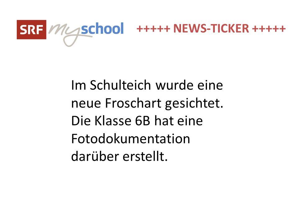 +++++ NEWS-TICKER +++++ Im Schulteich wurde eine neue Froschart gesichtet. Die Klasse 6B hat eine Fotodokumentation darüber erstellt.