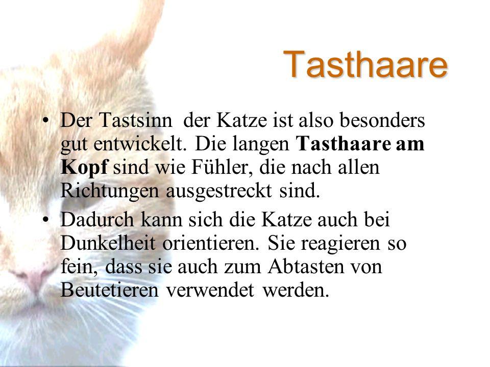 Tasthaare Der Tastsinn der Katze ist also besonders gut entwickelt.