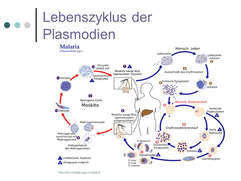 Lebenszyklus der Plasmodien http://de.wikipedia.org/wiki/Malaria